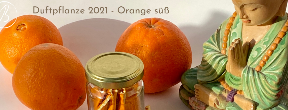 Duftpflanze 2021 Orange süß